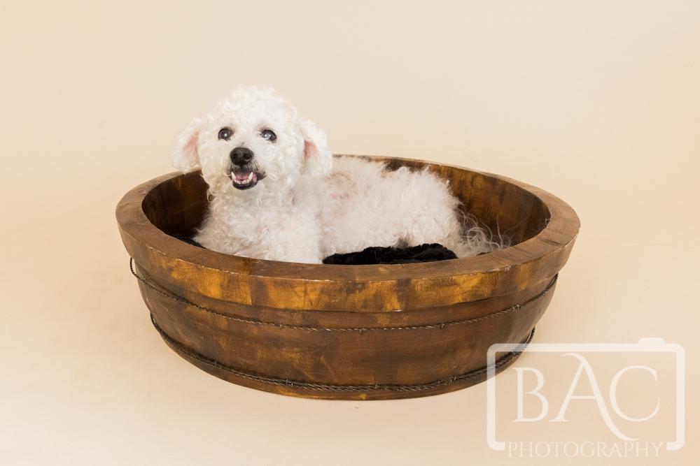 pet portrait in basket