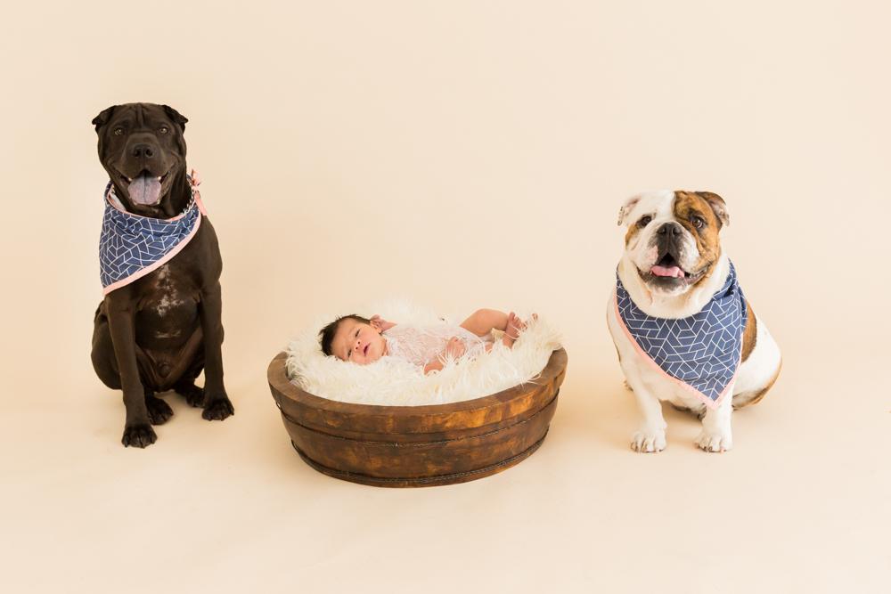 newborn portrait with two dogs in studio portrait