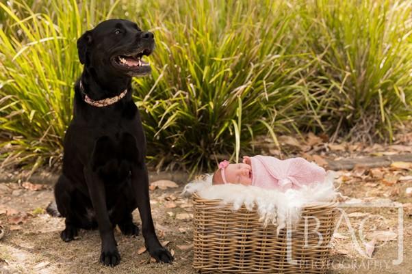 newborn and dog portrait in park
